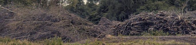 打破黏附并且注册从砍伐森林的森林 林业树开发 免版税库存图片