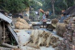 打谷手工的米 免版税库存照片
