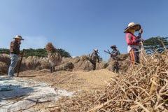 打谷通过搅拌的泰国农夫米分离种子 免版税库存照片