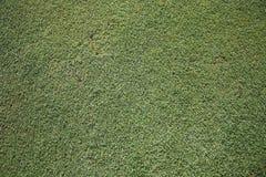 打高尔夫球草绿色 免版税库存照片