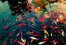 打鸣的鱼 库存图片
