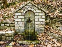 扔石头的饮水器在森林里 库存照片