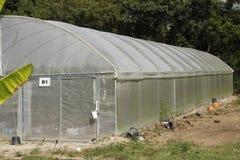 托儿所温室的西瓜植物 免版税库存图片