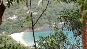托尔托拉岛树 免版税库存照片