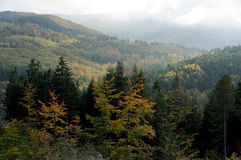 托斯卡纳山的森林 免版税图库摄影