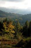 托斯卡纳山的森林 库存照片