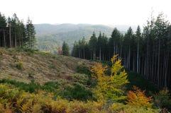 托斯卡纳山的森林 图库摄影