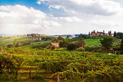 托斯卡纳意大利葡萄园和乡下 库存图片