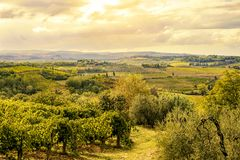 托斯卡纳意大利- 09 14 2017年:在圣吉米尼亚诺温暖的颜色旁边的葡萄园 免版税图库摄影