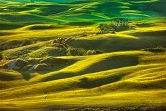 托斯卡纳春天,日落的绵延山 沃尔泰拉农村大局 免版税库存图片