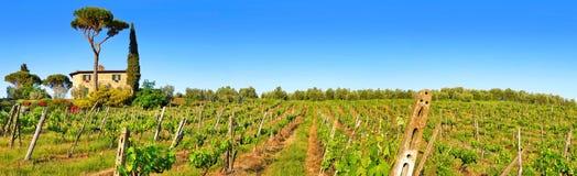 托斯卡纳有葡萄园的风景全景日落的, Chianti地区,意大利 库存照片
