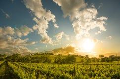 托斯卡纳风景在Sant `安吉洛Scalo和奇尼贾诺- 05/23/2016之间的Val d ` Orcia 库存照片