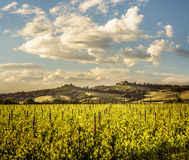 托斯卡纳风景在Sant `安吉洛Scalo和奇尼贾诺- 05/23/2016之间的Val d ` Orcia 免版税库存照片