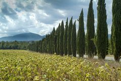 托斯卡纳,意大利,与柏的风景 免版税库存照片