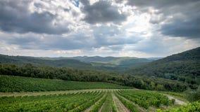 托斯卡纳,意大利- 2014年9月05日:一wineyard在秋天在托斯卡纳,意大利 免版税库存照片