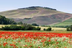 托斯卡纳,春天风景 免版税库存图片