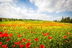 托斯卡纳,春天风景 库存图片