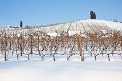 托斯卡纳: wineyard在冬天 库存图片