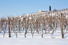 托斯卡纳:wineyard在冬天 库存图片