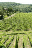 托斯卡纳(意大利)的风景 免版税图库摄影