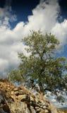 托斯坎农村横向 与蓝色多云天空的美丽的橄榄树 夏季,托斯卡纳 免版税库存图片