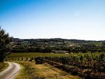 托斯坎葡萄园的风景,吉安迪地区,意大利 免版税库存图片