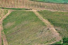 托斯坎葡萄园顶视图  免版税图库摄影