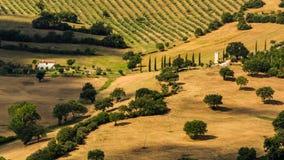 托斯坎领域和小山看法在Maremma地区在意大利 免版税库存照片
