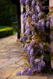 托特仿古房子Blakesley霍尔入口紫藤麻线藤装饰树花英国伯明翰 库存图片