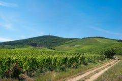 托考伊酒区域,匈牙利 免版税库存照片