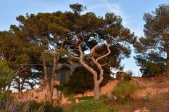 托萨德马尔城堡的教会  免版税库存图片