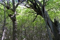 托里斯del潘恩国家公园的森林,智利巴塔哥尼亚,智利 免版税库存图片