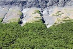 托里斯del潘恩国家公园的森林,智利巴塔哥尼亚,智利 库存图片