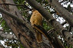 托里斯del潘恩国家公园W艰苦跋涉 库存图片