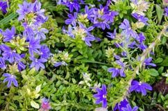 托雷维耶哈码头的热带植物在西班牙 库存照片
