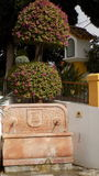 托雷莫利诺斯角植物庭院MOLINO台尔INCA- 免版税库存照片