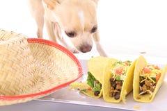 执行我食物的混乱没有 免版税库存图片