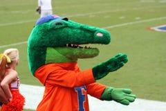 执行gator下颌的阿尔伯特鳄鱼 免版税库存图片