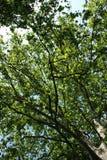 扩展树梢 库存照片