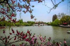 扬州苗条西湖五亭子桥梁 免版税图库摄影