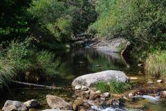 扭角羚在瀑布的浴 免版税图库摄影