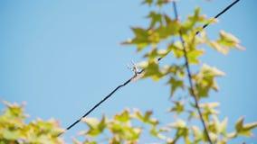 扭转室外街道照明导线  下午的看法反对树的天空和绿色叶子的 电子接线 股票视频