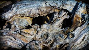 扭转的木头 纹理木头 库存图片