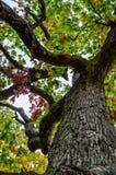 扭转的树干 库存图片