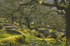 扭转的森林地 库存照片