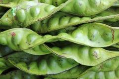 扭转的瓜尔豆,恶臭豆 库存照片