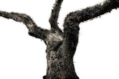扭转的结构树 免版税图库摄影