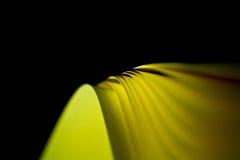 扭转的黄色纸背景III 图库摄影