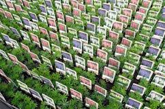 批发的羽扇豆属植物 库存图片