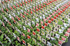 批发的蜀葵植物 库存图片